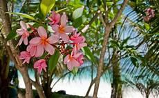 Tropical Flower Wallpaper Hd by Tropical Flowers Hd Wallpaper Wallpapers