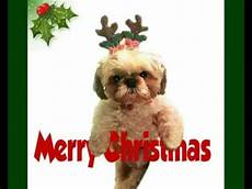 cute dog saying merry christmas youtube
