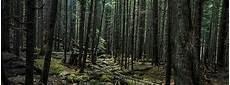 Contoh Hasil Hutan Non Kayu Yang Bermanfaat Bagi