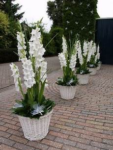 gladiolen in pot flowers kleine tuinen tuinontwerp