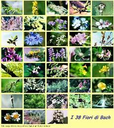 38 fiori di bach infinito di simona spataro fiori di bach