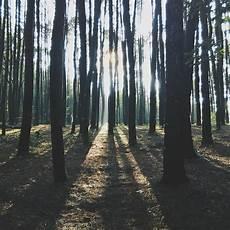 Hutan Pinus Mangunan Yogyakarta Ada Romantisme Di Setiap