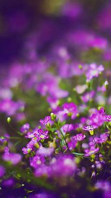 free flower wallpaper for phone cool wallpaper cool iphone backgrounds flowers free