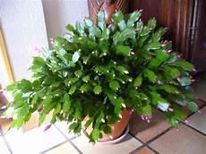 plante grasse avec fleur blanche map titecagne
