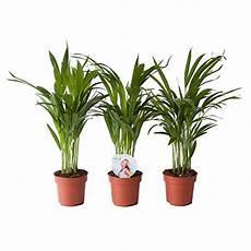 gras für garten sonstige zimmer kunstpflanzen und weitere