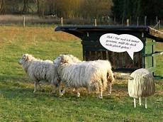 beleidigte leberwurst bilder beleidigte leberwurst foto bild tiere haustiere