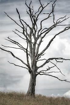 arbre mort achat que faire d un arbre mort au jardin solutions et id 233 es