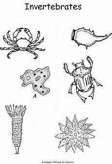 groups of animals coloring pages 17000 c1 w5 invertebrates coloring page djur och animales