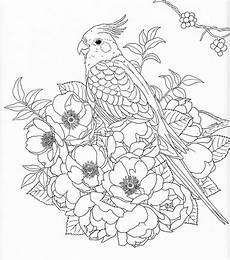 harmony of nature adult coloring book pg 30 color pages
