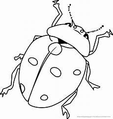 Malvorlagen Insekten Ausmalbild Insekten New Ausmalbilder K 195 Fer Schmetterlinge