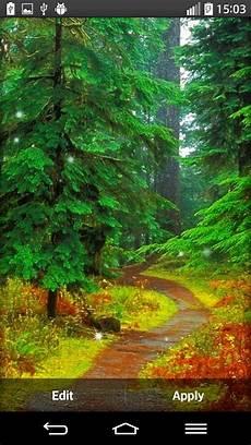 Gambar Latar Hutan Contoh Gambar Latar