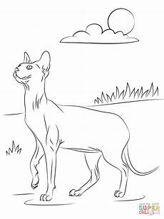 sphynx cat coloring page free printable coloring pages