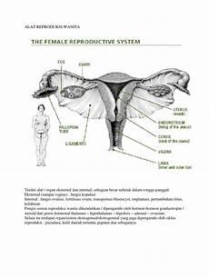 Gambar Alat Reproduksi Pria Dan Wanita Beserta Bagian