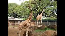 am zoo the best of honolulu zoo hd