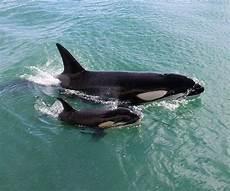 Unterwasser Tiere Malvorlagen Xing Pin By Haaker On Beautiful Animals Of The World In