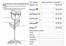 science plants ks1 worksheets 13580 year 1 plants and growing unit science teaching resources