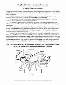 crayfish dissection worksheet free printables worksheet