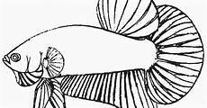 Gambar Mewarnai Ikan Laga Cupang Untuk Anak Anak