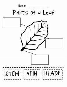 science worksheets leaves 12281 parts of a leaf early years science newsletter steam projects