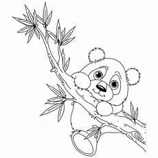 Ausmalbilder Tiere Panda Baby Panda Zum Ausmalen Malvorlagen