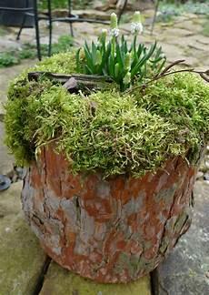 Ein Bl 252 Hender Baumstamm Baumstamm Garten Baumstamm Deko