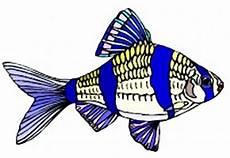 Ausmalbilder Bunte Fische Fische Ausmalbilder Kostenlos