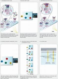 illumina solexa tech summary illumina s solexa sequencing technology