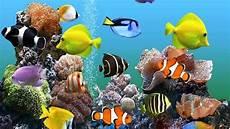 Gambar Ikan Dalam Aquarium Yang Cantik Dan Terindah
