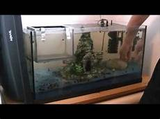 aquarium deko ideen aquarium dekoration verstellen