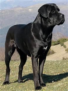 Hunderassen Der Perfekte Hund Webseite