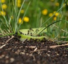 Ameisen Im Haus Garten Oder In Der Wohnung Was Wirklich