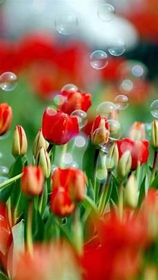 sfondo a fiori sfondi hd fiori 70 immagini