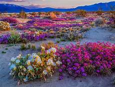 california might be set for another incredible wildflower bloom