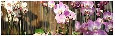 shop werkstatt floral