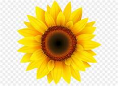 Common Sunflower Pixel XCF  PNG Clipart Picture