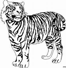 Ausmalbilder Tiere Tiger Schoener Tiger Ausmalbild Malvorlage Tiere