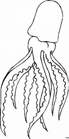 qualle mit langen tentakeln ausmalbild malvorlage tiere