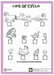 animal cycle worksheets 13938 pin on worksheet for