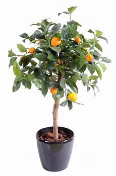 arbre fruitier en pot arbre artificiel fruitier oranger t 234 te en pot int 233 rieur