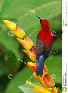 Malvorlage Vogel Mit Blume Roter Vogel Mit Blume Stockfoto Bild Tiere Braun