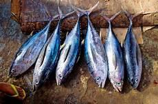 Baik Untuk Kesehatan Ini Dia 10 Jenis Ikan Laut Yang Bisa