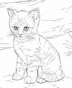 Malvorlagen Katzenbabys Kostenlos Malvorlagen Katzenbabys Kostenlos Kinder Zeichnen Und
