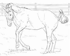 Ausmalbilder Springende Pferde Ausmalbilder Springende Pferde