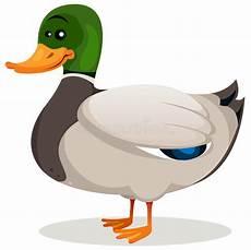 mallard duck stock vector illustration of feather