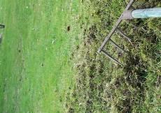 Rasenpflege 5 Vertikutieren Moos Ausharken Im M 228 Rz Oder