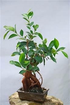 pflanzen fürs schlafzimmer feng shui zimmerpflanzen nach feng shui wohnen de ratgeber