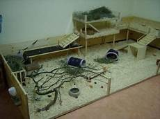 guinea pig house plans pin on guinea pis