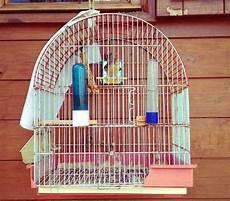 accessori per gabbie uccelli le migliori gabbie per uccelli qualit 224 prezzo 5 modelli