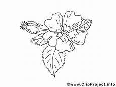 Einfache Malvorlagen Blumen Einfache Malvorlage Blume