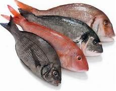 Perubahan Perubahan Setelah Ikan Mati Zona Ik N